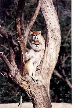 Monkeys in the Tree by Denise Moore