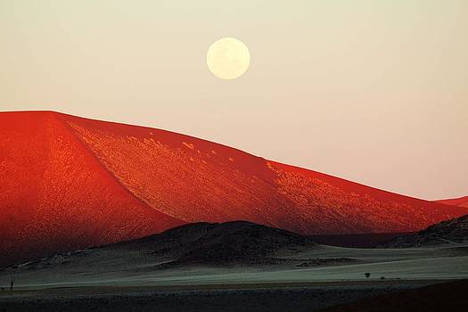 Moon Rise by Nolan Taylor