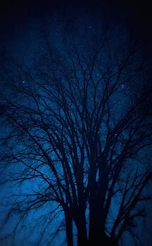 Moonlit Blues by Amy Schauland