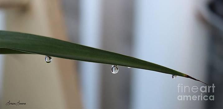 Morning Dew 2 by Lorraine Louwerse