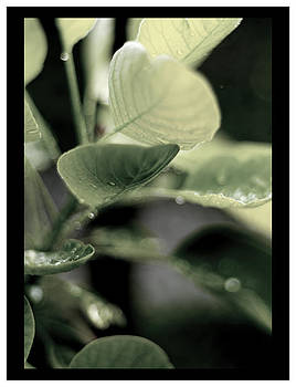 Morning Dew by Sherry Fain