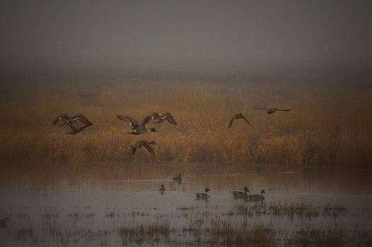 Morning Flight by Michael Donovan