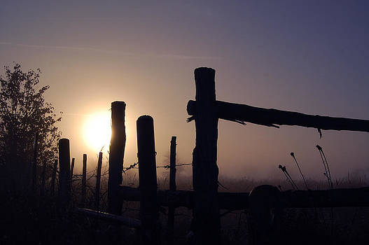 Morning Mist by Cindy Rubin