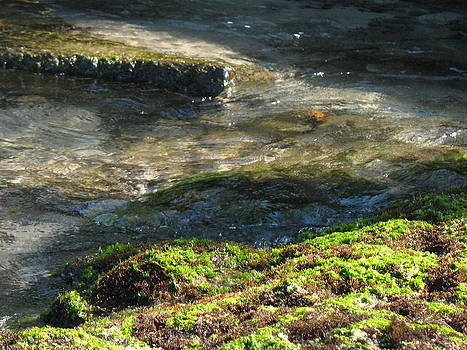 Moss and Moving Water by Ron Holiday Broomell