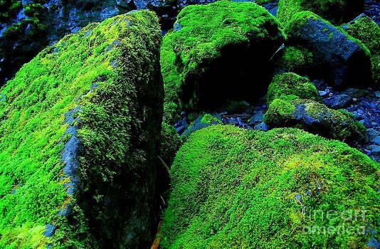Moss In Blue by Michael Wyatt