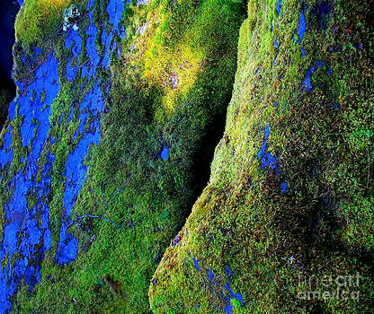 Moss In Light by Michael Wyatt