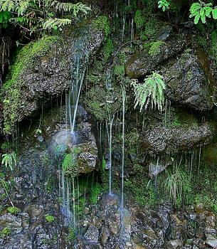 Moss in Zen by Michael Wyatt