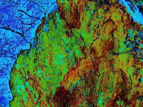 Moss on rock by Helen Carson