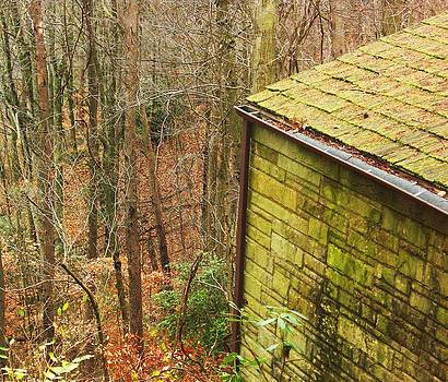 Mossy shed by Vicky Mowrer