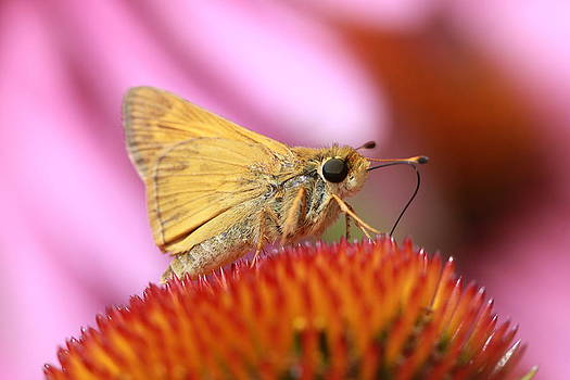Moth 2 by Laura Tucker