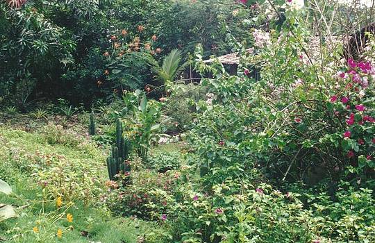 Mother Nature's Garden by Anna Tetro