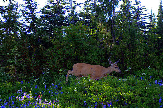 Lynn Bawden - Mount Rainier Deer