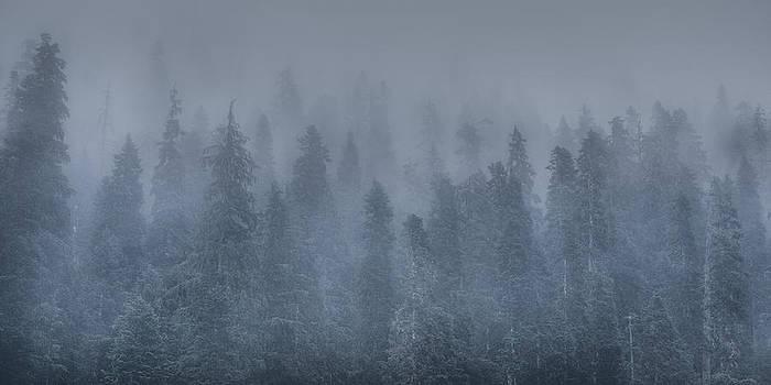 Matt Dobson - Mountain Fog