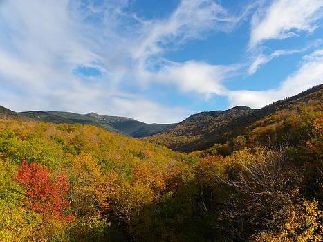 Mountain Foliage and Blue Skies by Sarah Egan