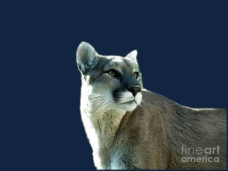 Mountain Lion Beauty by Donna Parlow