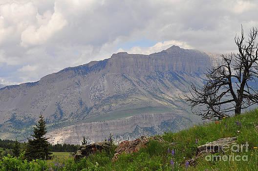 Mountain Wilderness 1 by Diana Nigon