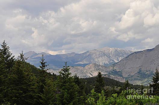 Mountain Wilderness 2 by Diana Nigon