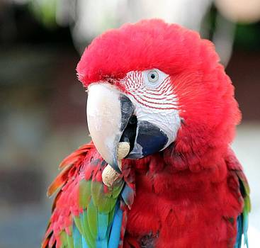 Mr Macaw by Shiladitya Sinha