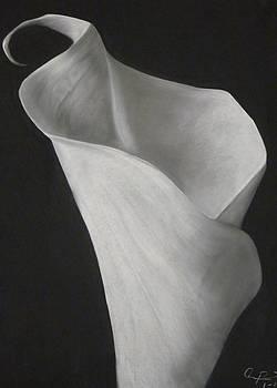 Mrs. Jackson's Lily by Adrian Pickett Jr