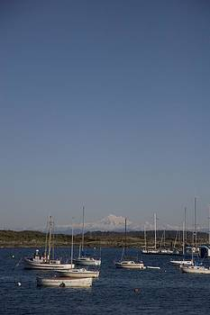 Mt Baker Looms Over A Harbor Full by Taylor S. Kennedy
