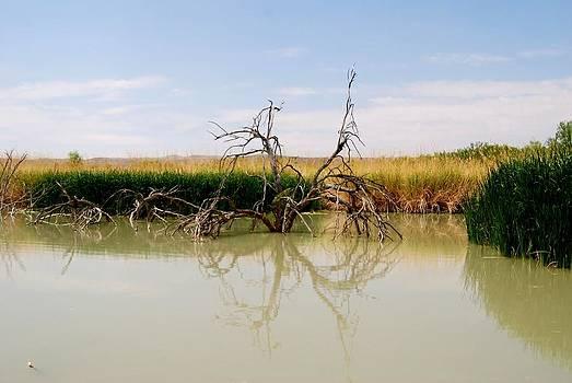 Judy Hall-Folde - Muddy Reflection