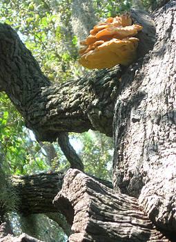 Mushroom Man by Juliana  Blessington