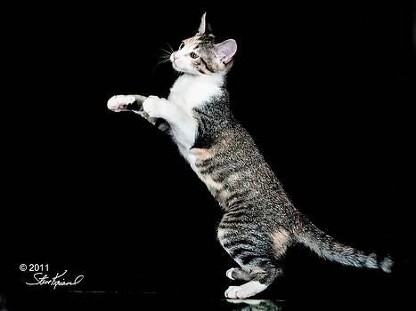 Steve Knievel - My Bunny Hop Dance