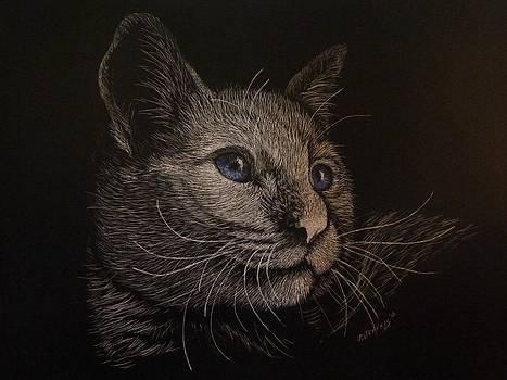 My cat Boo by Jennifer Jeffris