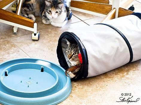 Steve Knievel - My Little Tunnel