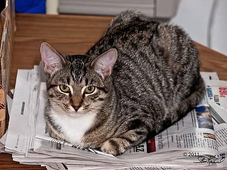 Steve Knievel - My Newspaper Now