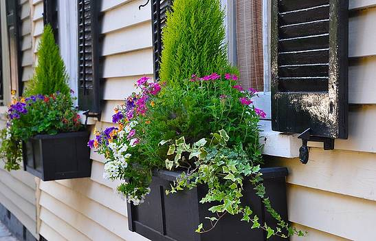 My Tradd Street Window Boxes by Lori Kesten