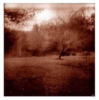 DOUG  DUFFEY - MY YARD POND FOREST