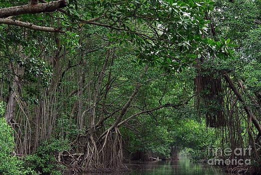 Mystery River by Gwendolyne Allen