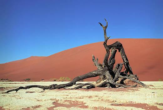 Namib desert by Sergey Korotkov