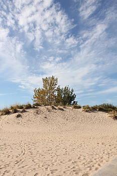 Nantucket by Sheryl Burns