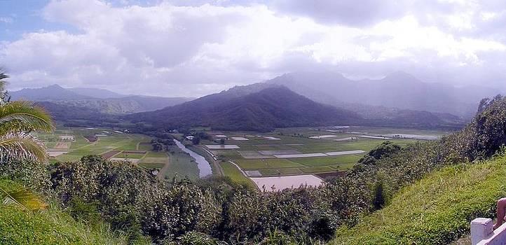 Napali Coast Fields by Edward Hass
