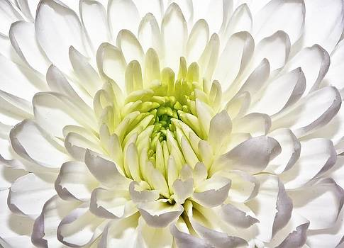 Natural Symmetry by Nancie Rowan