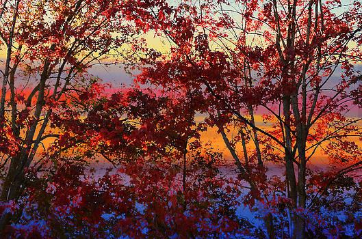 Nature paints Autumn by Sasse Photo