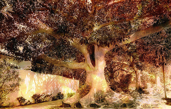 Nature's Art by Carol Kinkead