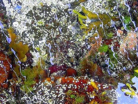 Natures Way Of Painting by Katina Cote
