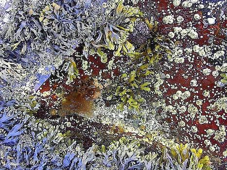 Natures Wonders2 by Katina Cote