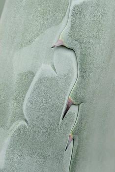 Tom Biegalski - New Cactus Thorns