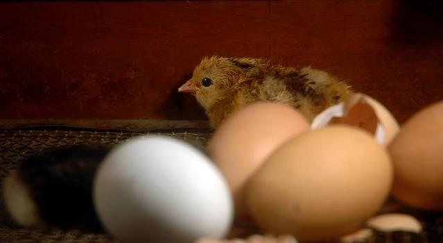 LeeAnn McLaneGoetz McLaneGoetzStudioLLCcom - New Hatching