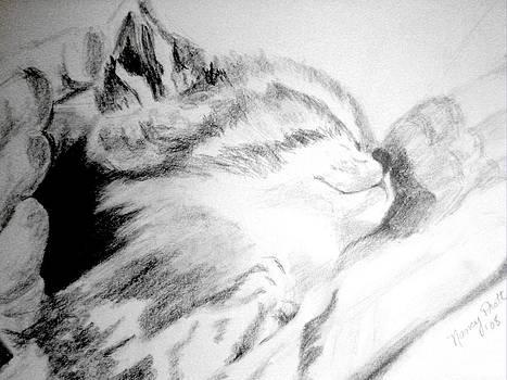 New Kitten by Nancy Pratt