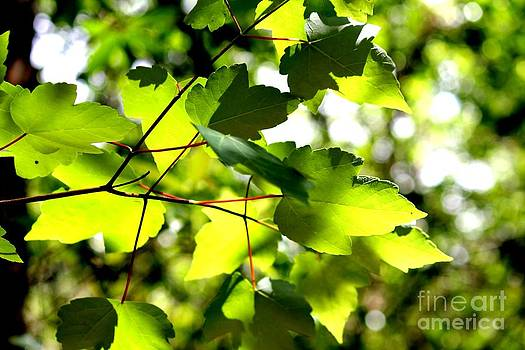 New Leaves by Theresa Willingham