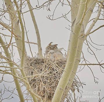 Newborn Owlet  by Judy Grant