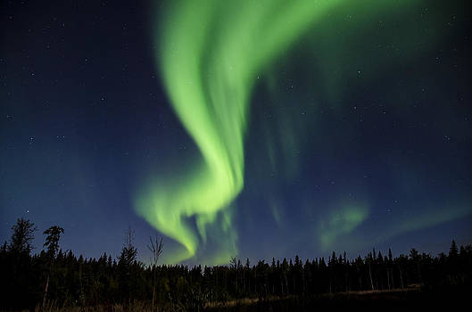 Night Lights by Steve  Milner