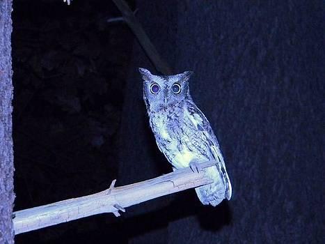 Night Owl by Andrew Siecienski