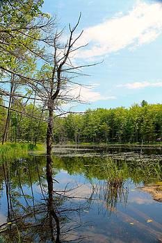 No Name Lake by Timothy Donahue