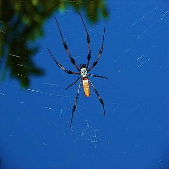 Not-So Itsy-Bitsy Spider by Joy Braverman
